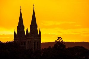 Cathedral spires in the bush