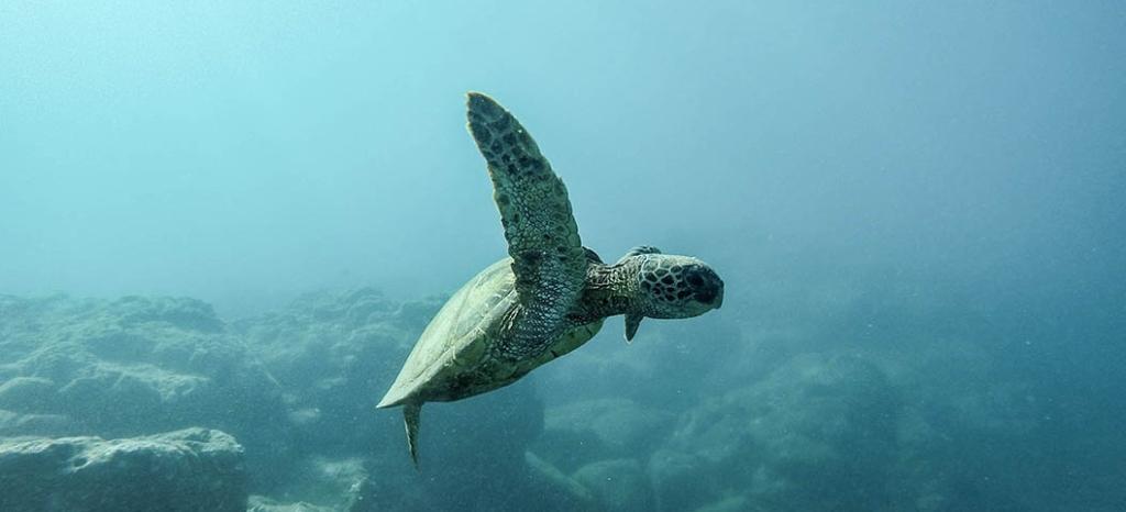 SDG - Draft Global Biodiversity Framework Published
