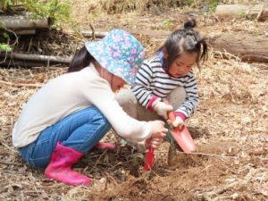 RfP Japan's afforestation project